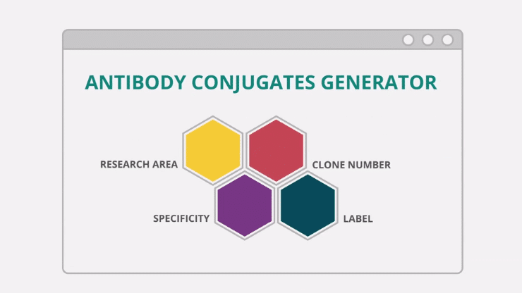 Innova Antibody Conjugates Generator Video Storyboard 10
